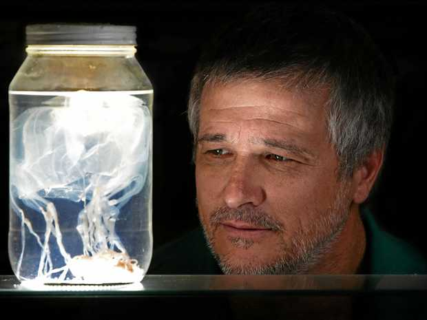 Dr Jamie Seymour, Associate Professor for the Queensland Tropical Health Alliance at the School of Public Health and Tropical Medicine, Cairns Campus, with a box jellyfish in a jar.