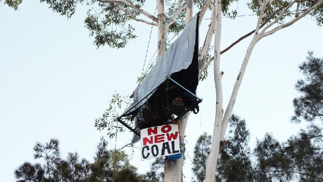 Natalie Berry perched in a tree as part of a blocakde which shut services on Aurizon's coal railway line.