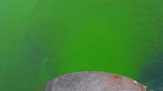 A bright green, alien-like slime has taken over the Mooloolaba Wharf Marina.