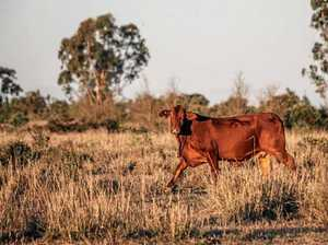Mackay on track for driest January on record