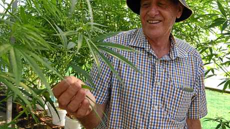 FUTURE GROWTH: Hemp breeder David Gillespie with a few plants.