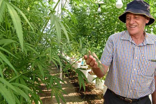 FUTURE GROWTH: Hemp breeder David Gillespie with a few plants.