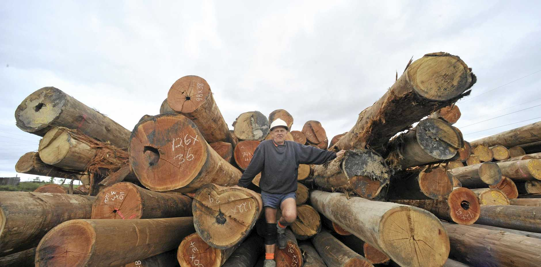 SKILLING WOKERS: A timber training centre will open in Maryborough.