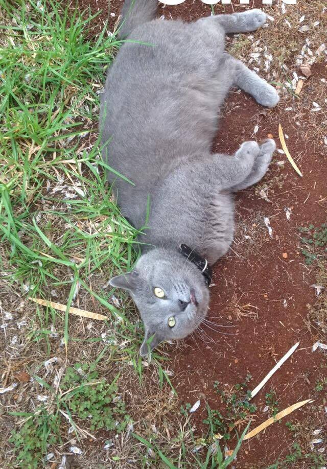 Smokey the cat was euthanised as his owner Corey Vickers desperately searched for him.