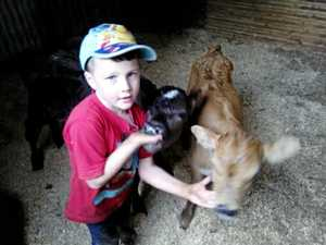 Shoddy thieves take young farmer's poddy calves