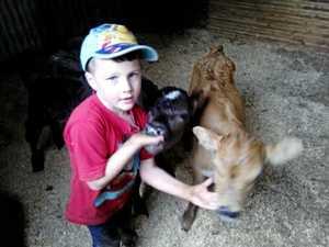 Shoddy thieves take young farmer's poddy calves