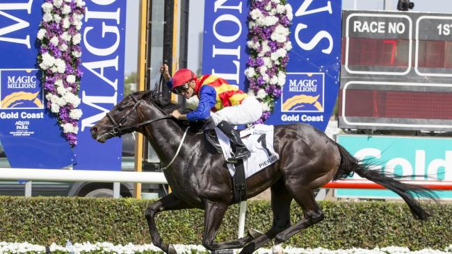 Pierata wins Magic Millions Race 7 the Three-Year-Old Guineas ridden by Corey Brown. Pic Tim Marsden