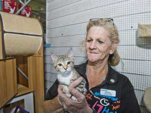 Influx of surrendered pets at Toowoomba RSPCA
