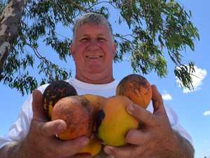 Farmer strikes black gold with mango giveaway