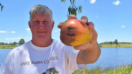 Brian Burton's free giveaway of B Grade mangoes has turned into a bonanza for him.