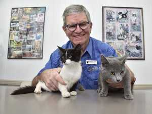 Toowoomba's cat registration policy isn't working