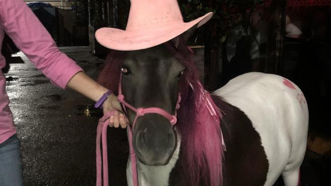 The pony was taken to La Di Da nightclub