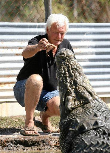 Koorana Crocodile Farm owner John Lever feeds one of his bigger crocs.   Photo Chris Ison