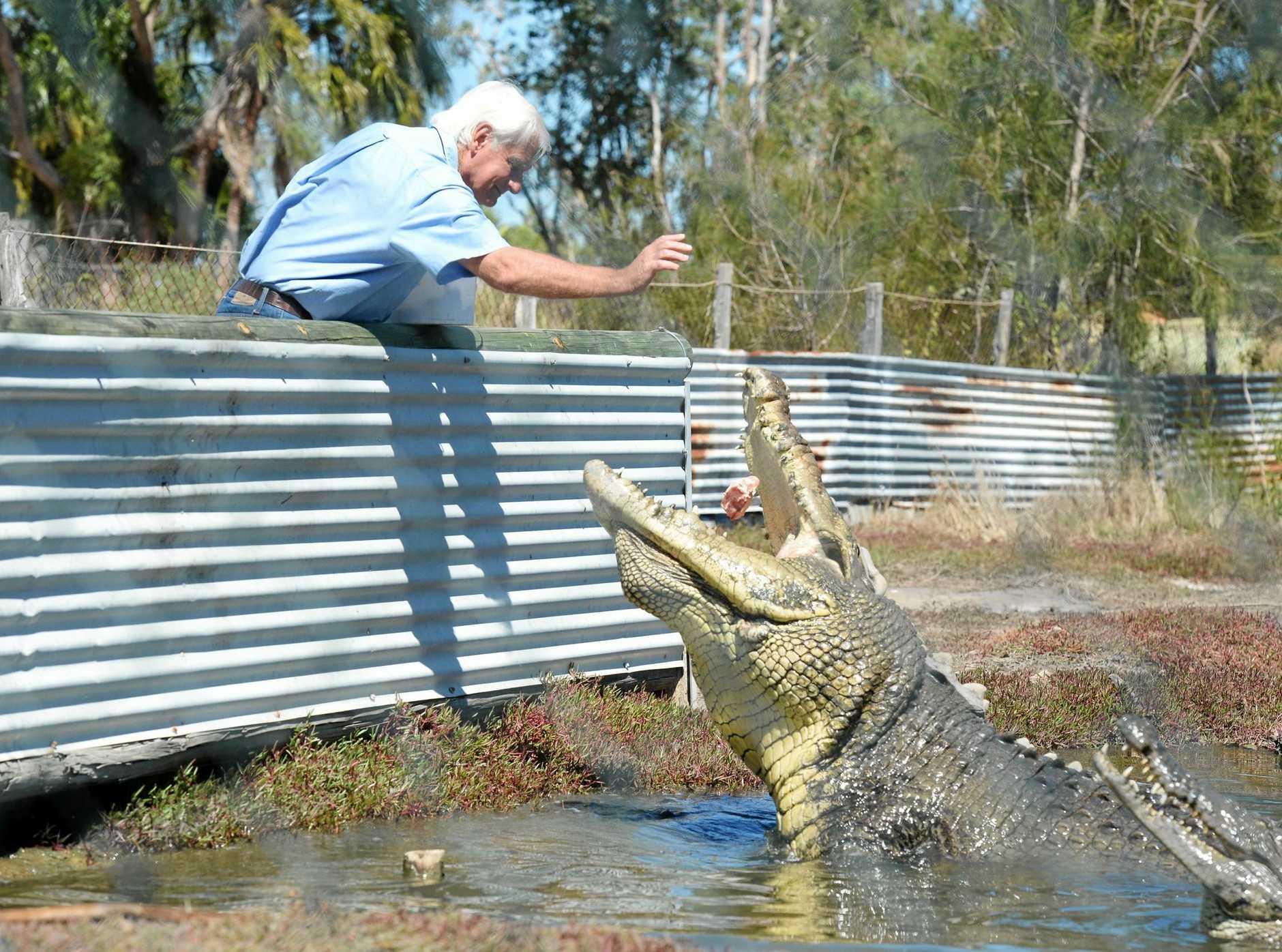 Koorana crocodile farm owner John Lever feeds Buka, a one tonne crocodile. Photo Rachael Conaghan/The Morning Bulletin