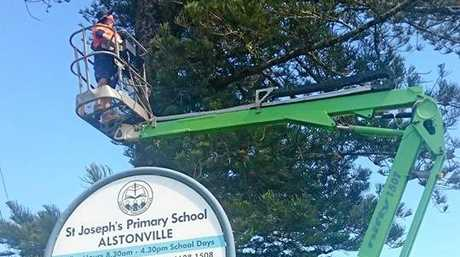 A royal spoonbill chick was rescued by WIRES Northern Rivers volunteers at Alstonville.