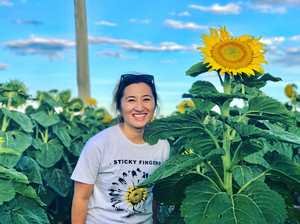 GREAT SNAP: Bao Xiong gazes at the stunning sunflowers in southern Queensland.