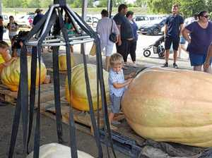 Summerland Pumkin Competition