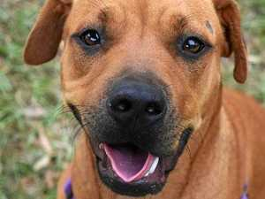10 animals at Gympie RSPCA who need a new home