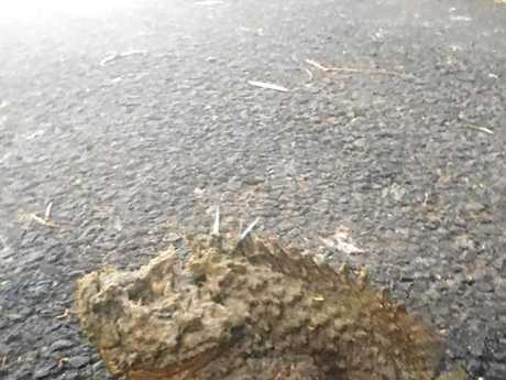 DEADLY FISH: Toogoom resident Daniel Wayne snapped pictures of the venomous fish on a boat ramp at Toogoom.