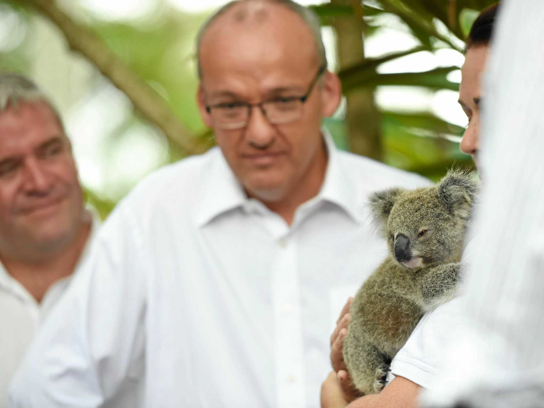 NSW Opposition Leader Luke Foley announces a national conservation initiative for koalas at the Koala Care Centre in Lismore. Photo Marc Stapelberg / The Northern Star