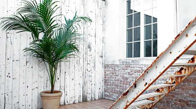 Kentia palms make an ideal indoor plant as they are slow-growing and are tolerant of low light and low humidity.