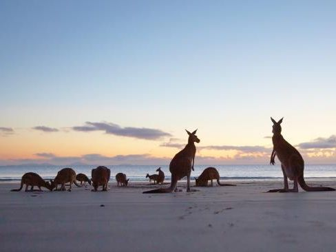 Cape Hillsborough near Mackay, which has been named Australia's No.1 town. Picture: wotif.com