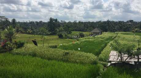 Rice fields are always on trend.