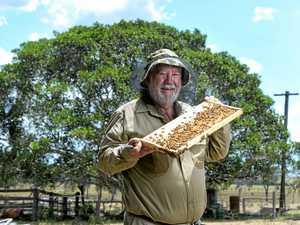 AM honour sweet reward for Ipswich beekeeper