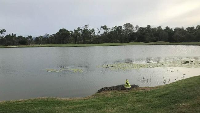 The crocodile at Willows Golf course