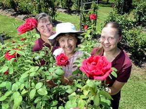 Kalbar rose farm continues to bloom