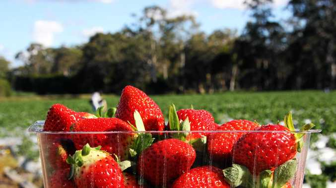 Strawberries will be back on the menu for Ballantynes by May.