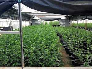 Police pounce on $18 million Esk drug 'plantation'