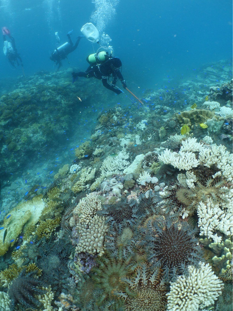 Divers on the Kanimbla destroyed 47,000 crown of thorns starfish on an eight-day trip to Swain Reefs in January.