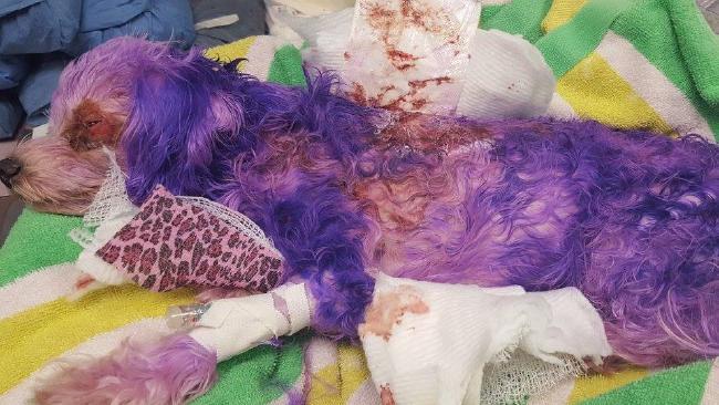 """Violet's skin """"began to slough off"""". Picture: Facebook"""