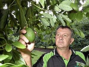 Avo off Toowoomba menus as prices increase