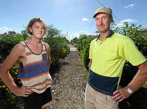 Green thumb battles council over Rocky verge garden