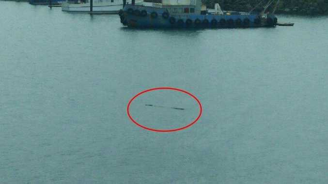 A crocodile has been spotted swimming inside the Mackay Marina.