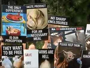 Farms come under fire in animal liberation protest