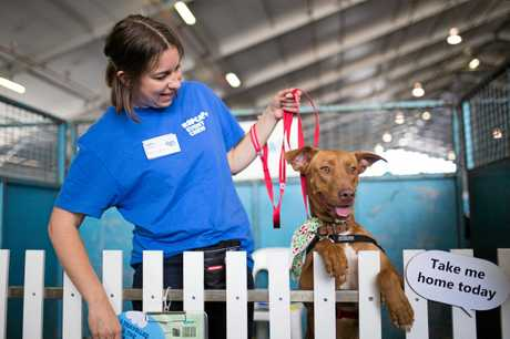 WORK: The RSPCA has launched an app to help reduce the rate of pet abandonment.