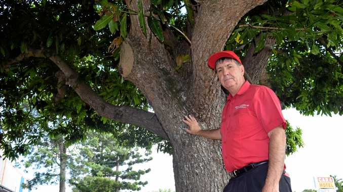 MANGO MADNESS: Maryborough MP Bruce Saunders wants these heritage-listed mango trees removed to allow upgrades to the Maryborough Hospital to go ahead. The department has rejected an exemption certificate submitted to remove the trees.