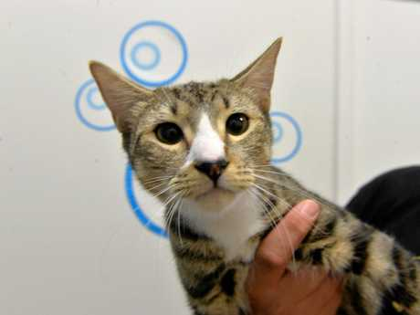 At least 10 cats and kittens will be up for adoption on Sunday, February 3