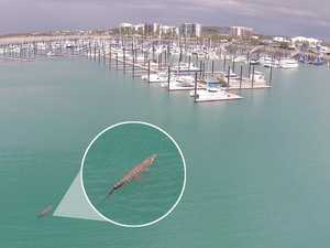 Incredible drone photo captures 'massive croc' in harbour