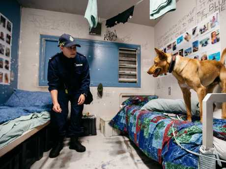 Officers with a dog during a prison cell raid at Silverwater. Picture: Jonathan Ng.