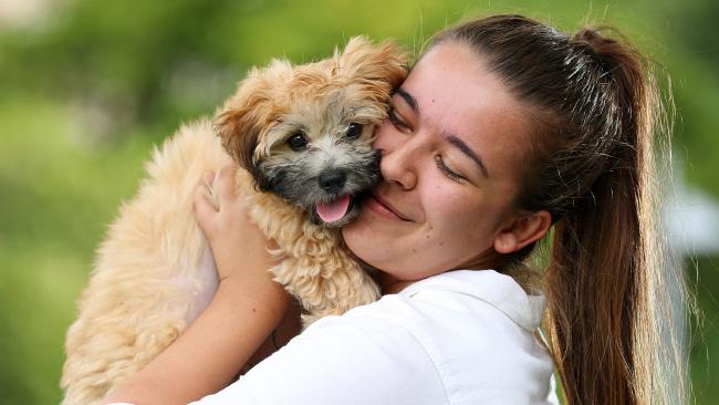 Bianca Szmetana, 20, of Woolloongabba, has made sure her little shitzu maltese Maxie is vaccinated. Picture: Liam Kidston