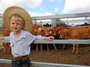 CQ market: Strong demand for steer calves
