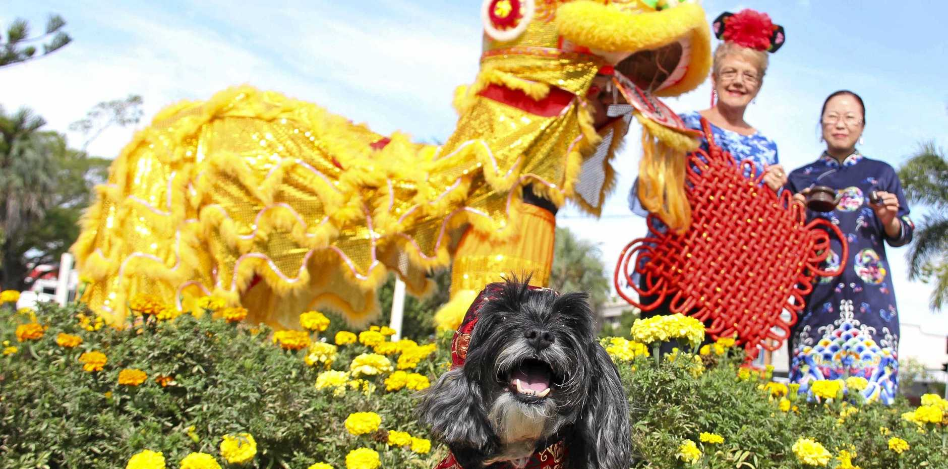 DOGS' DAY: The Year of the Dog will be welcomed with massive celebrations in Bundy.