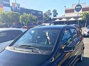 Dog left in hot car while owner visits pet-friendly cafe