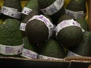 Is this Queensland's most expensive avocado?