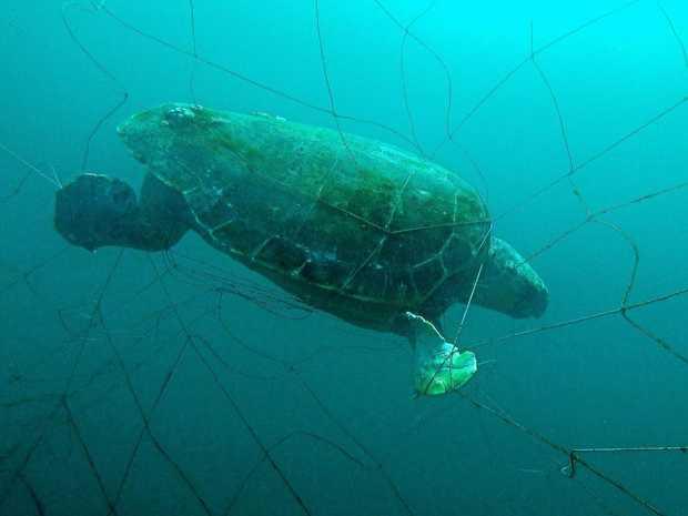 Ballina's deputy mayor has labelled the shark net trial