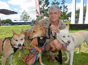 Meet Ray's dingo mates at local sanctuary
